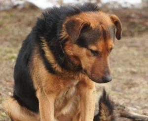 Dog Waited Seven Days At Side Of Road Because His Owner Said, 'Stay'