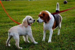 5 Tips To Help Your Anxious Dog Meet New Pups