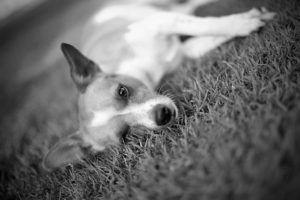 6 Things Your Deceased Dog Would Want You To Know
