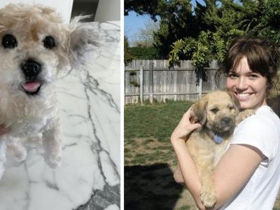 Mandy Moore Prepares For Baby With Life-Like Replica Of Late Dog