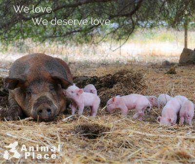 This is a family. They love and deserve love. Learn how brave