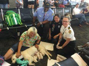 Service Dog Who Gave Birth In Airport Raises Concerns Among Dog Lovers