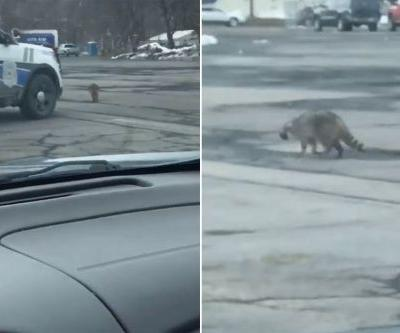 Disturbing video shows cops charging raccoon with squad cars until they finally kill it