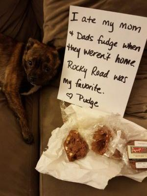 Pudge Loves Fudge