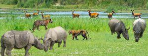 Nepal plans to add tourism activities in protected parks