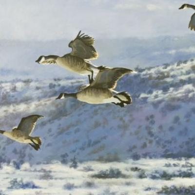 "Original Canada Geese Wildlife Painting ""Gliding Home"" by Colorado Artist Nancee Jean Busse"