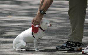 5 Reasons Why You Should Ditch Your Dog's Retractable Leash