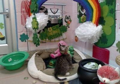 Legend says that leprechauns hide their pots of gold at the end