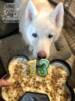 Happy Birthday to Pupster, Wolfie! And a Gift of Snow from Furangel Pupsters Bandit & Chloe
