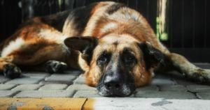10 Natural Ways To Relieve Canine Arthritis & Joint Pain