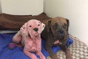 Abandoned Pink Dog & Her Brother Find New Hope After Treatment
