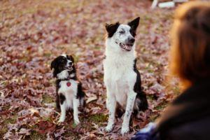 6 Signs Your Dog Trusts You With His Life