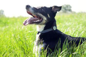 Improve Your Dog's Health And Get To Know Him Better Than Ever With Animo!
