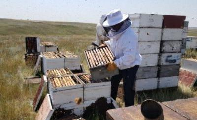 Bee Well. Blackstone LaunchPad powered by Techstars Spotlight: Combplex Aims to Help Beekeepers Save the Hives
