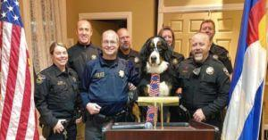 Parker The Snow Dog Becomes Honorary Mayor In Georgetown