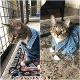 Please Stop Whatever You're Doing and Peep These Photos of a Cat Wearing a Jean Jacket