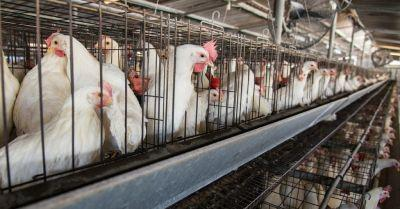 First Criminal Charges Filed under California's Prevention of Farm Animal Cruelty Act