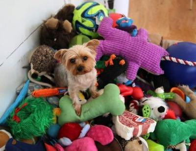 What Are The Best Dog Toys For Malteses?