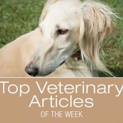 Top Veterinary Articles of the Week: Potential Link between Certain Diets and Canine Dilated Cardiomyopathy Update, and more