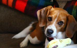 Every Dog Owner Needs To Know The Doggy Heimlich Maneuver