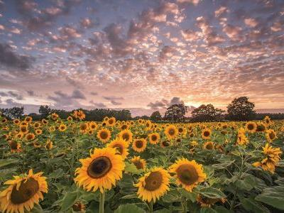 Photo gallery: 10 beautiful landscapes of Hampshire through the seasons