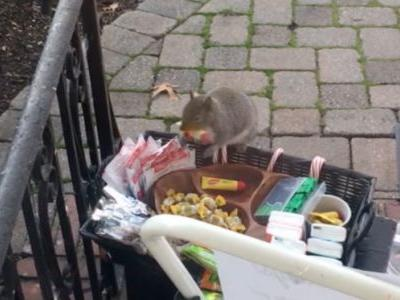 Squirrel caught stealing snacks from family's front porch