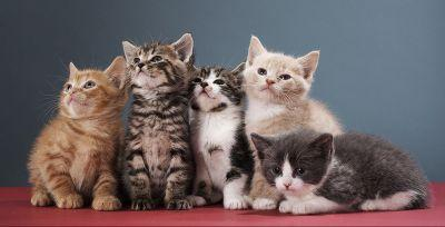 15 reasons why cats are far better than boyfriends or girlfriends