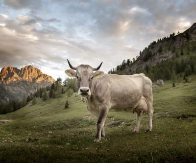Discover the World of Asiago