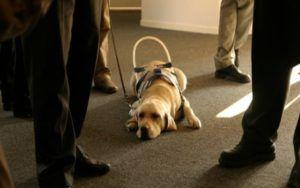 Researchers Hope To Identify Successful Working Dogs Through Cognitive Testing
