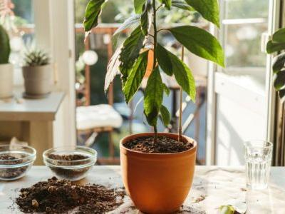 8 Signs Your Plant Needs Some Help - And 1 That It's Truly Dead