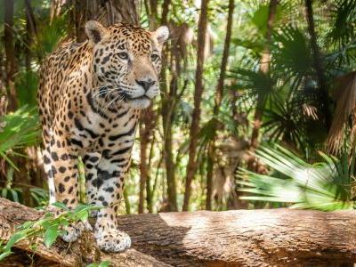 Belize's 7 greatest wildlife experiences
