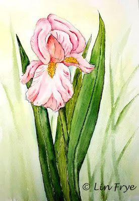Journal - Pink Iris in Pen and Watercolor