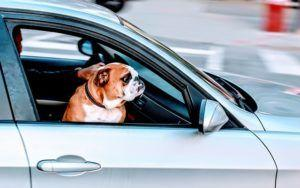 Does Your Dog Hate Car Rides? Try These Tips