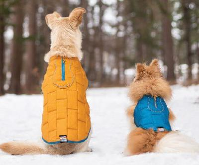 The Best Winter Gear for Dogs