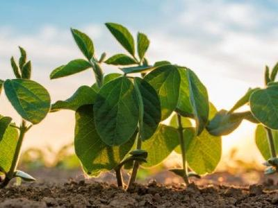 Plant Biologist: Genetics Crucial for Food Security and Sustainable Agriculture