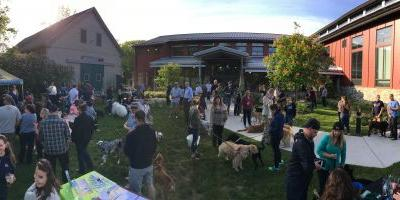 Dog Friendly Summer Events 2017: Dogs Welcome!