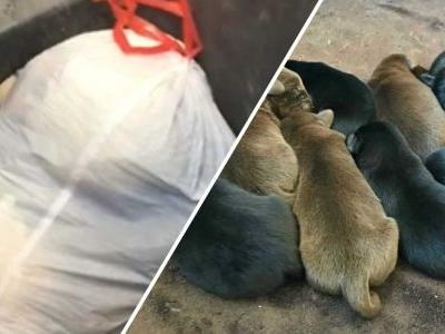 Police: Man admits dumping bag of puppies in trash can