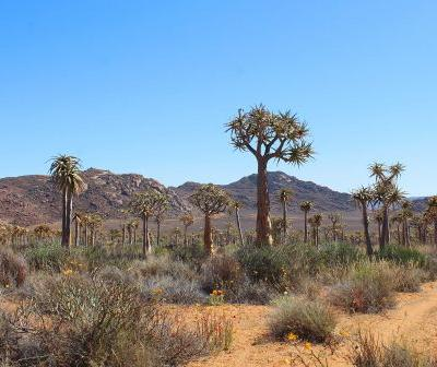 Highlights and wild wonders of South Africa's Northern Cape