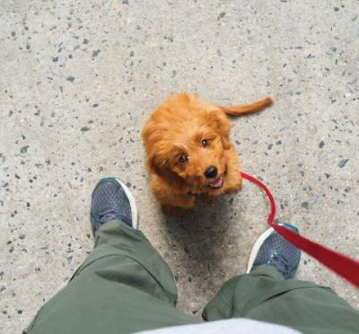 NYC to Launch Pilot Program for Air-Conditioned Dog Harbors Outside of Shops