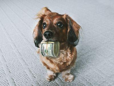 10 Easy Ways To Save Money When You Own Dogs