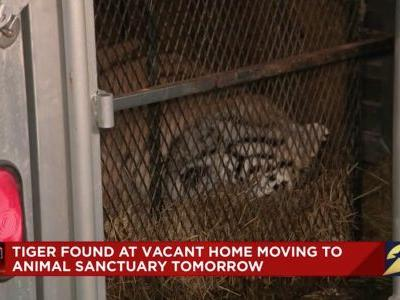 A man went to smoke weed in an abandoned Houston house, and he thought he was hallucinating when he came across a gigantic tiger
