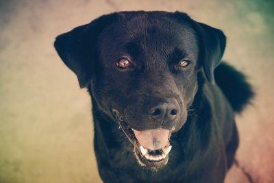 Case Inspiring Change in Florida Dog Bite Law Featured in The Florida Bar Journal