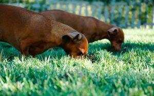 The Ugly Truth About Cloning Your Dog