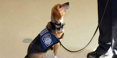 Former Shelter Dog Now Sniffs For Contraband At Georgia Airport