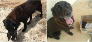 2 Hero Dogs Step In To Save A Tiny Puppy Someone Threw In The Trash
