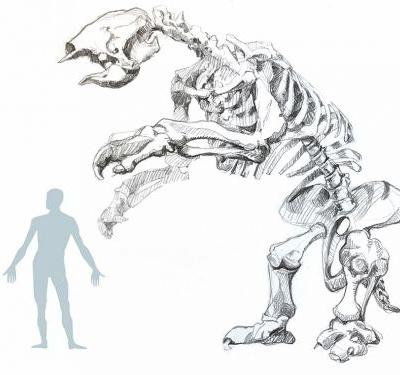 Divers found fossils of an ancient giant sloth hidden in a sinkhole. The creature was 20 feet long