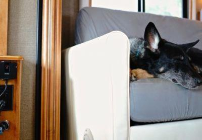 Nimble Remote Temperature Monitor Keeps Pets Safe In RVs and Cars