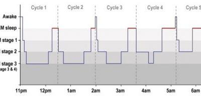 The Importance of Sleep Cycles on Productivity