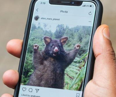 Instagram gets browser notification support