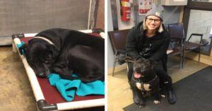 UPDATE: Boomer Won't Spend One More Thanksgiving In A Shelter!
